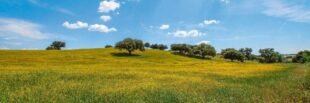 Linoleum Großhandel - Linoleum ein wohngesunder natürlicher Bodenbelag aus nachwachsenden Rohstoffen 1
